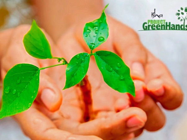 Plant Trees with Project GreenHands!